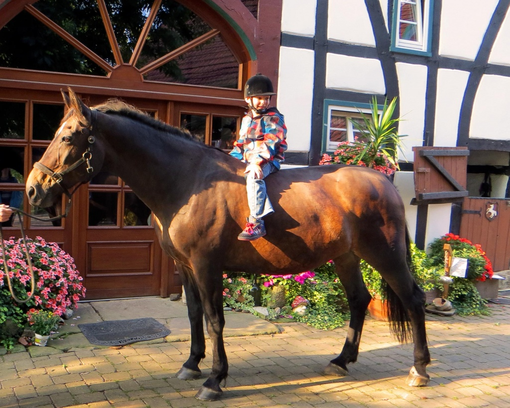 Kleiner Junge sitzt auf dem Pferd