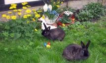 Zwei Marderkaninchen im Gras