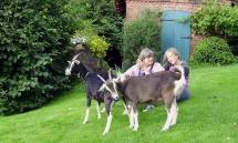 Zwei Ziegen auf der Weide beim Backhaus