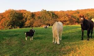 Weide im Herbst mit Pferden, Ziegen und Schafen