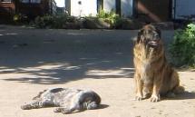 Zwei Hunde sonnen sich auf dem Hof