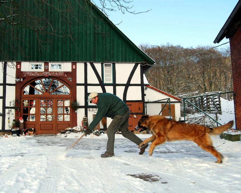 Fine hilft beim Schneefegen