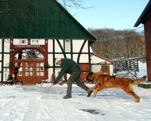 Foto vom Schneeschieben mit Hund