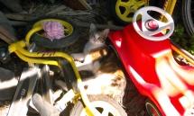 Die Katze Plisch liegt zwischen den Spielsachen