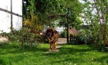 hunde04